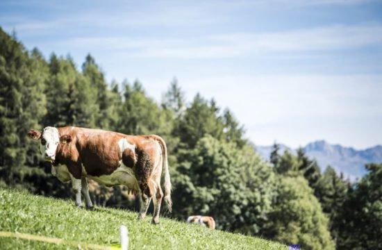 bergchalet-feichterhof-tils-brixen-25